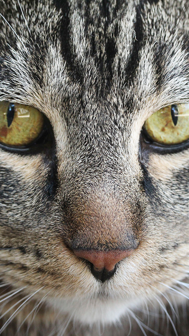 Image Result For Sundays With Tabs The Cat Makeup And Beauty Blog Mascot Vol