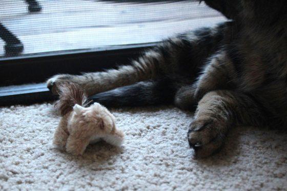 tabs-cat-toy-squirrel-1