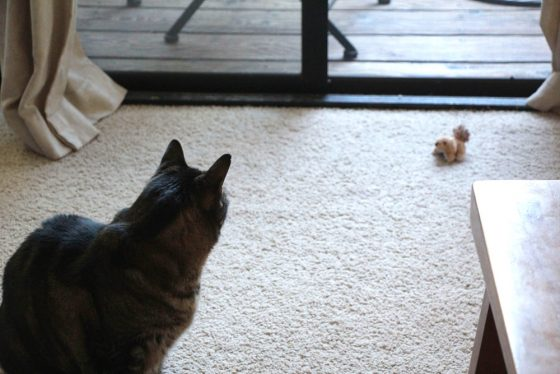 tabs-cat-toy-squirrel-3