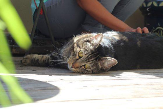 tabs-cat-gardening-2