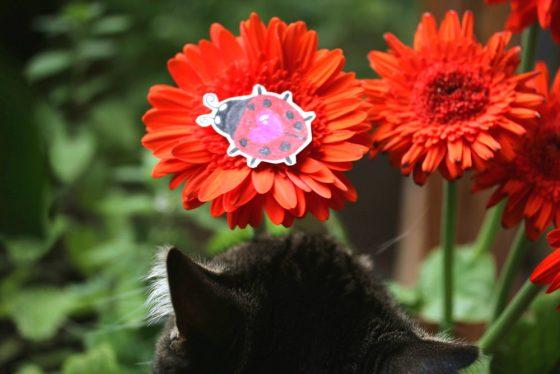 tabs-cat-ladybug