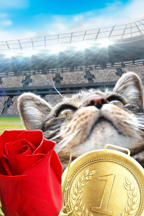 tabs-cat-olympics-gold-medal