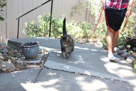 tabs-cat-walking-leash-1