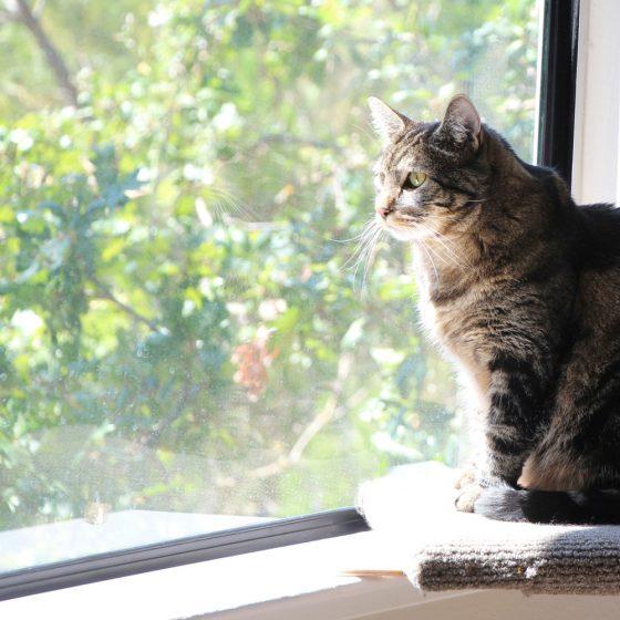 tabs-cat-window-thinker-philosophy