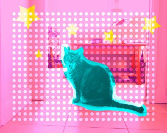 happy caturday