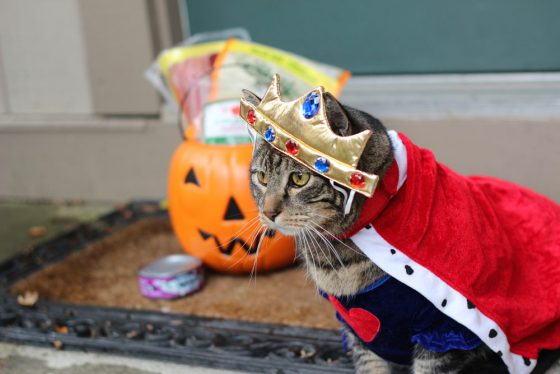 Trick or cat treat!