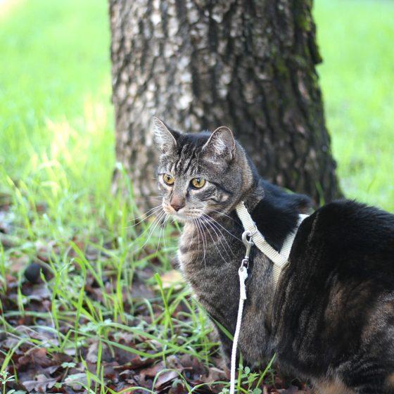 tabs-cat-thanksgiving-2
