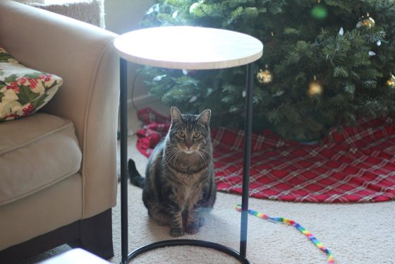 tabs-cat-playing-christmas-2016-7