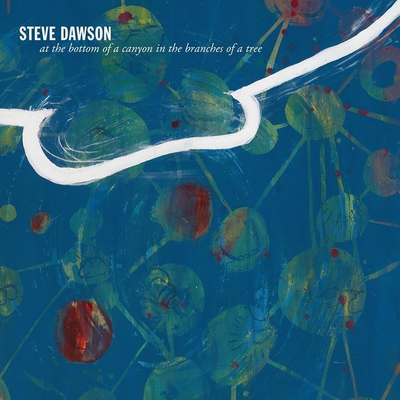 Steve Dawson - at the bottom of a canyon in the branches of a tree