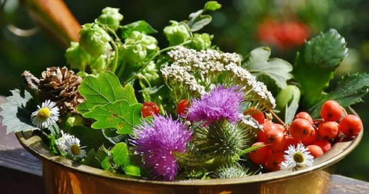 Forage, Barter and simple frugal living – A great way to save more money