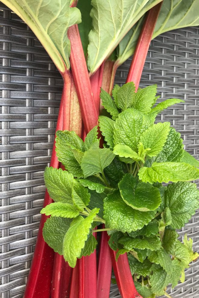 Stalks of rhubarb and a bunch of lemon balm