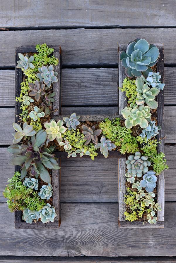 DIY Succulent Letter Planter