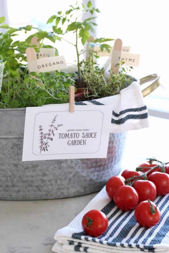 Grow your own Tomato sauce garden