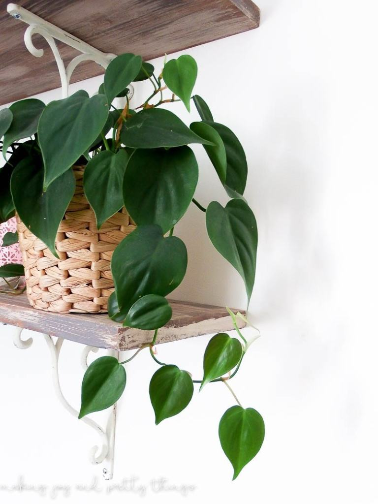 budget friendly faux indoor houseplants