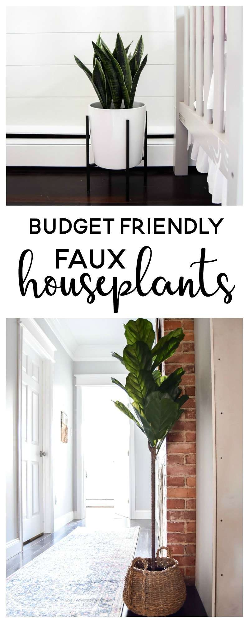 two favorite budget friendly indoor houseplants