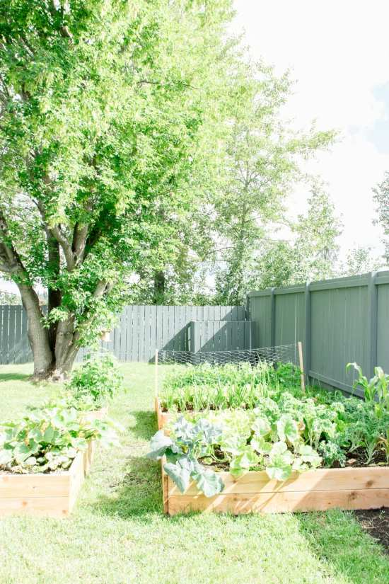 raised garden bed, cedar garden bed, vegetable garden