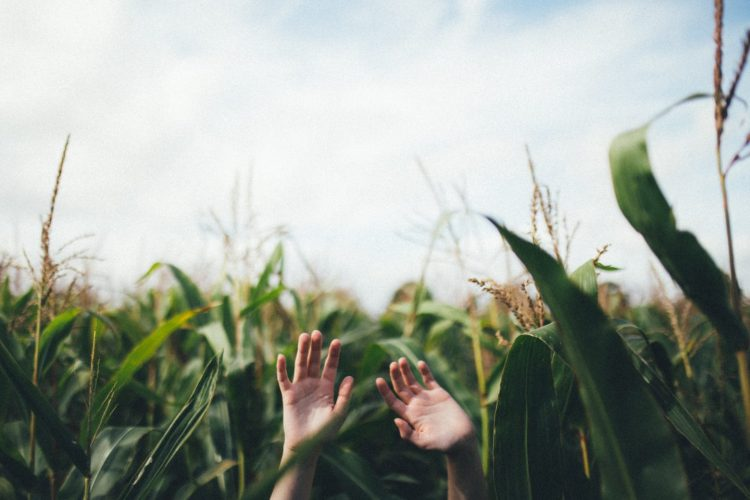 unsplash-corn-maze-lost