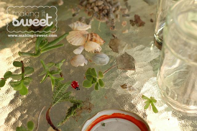 DIY Terrarium Plants
