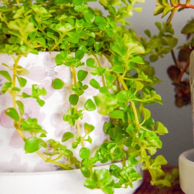 DIY Farmhouse Style Decoupaged Pots