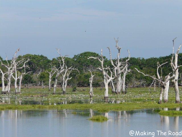 safari parc national yala sri lanka