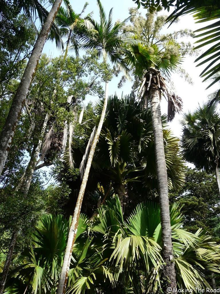 activité île maurice jardin botanique