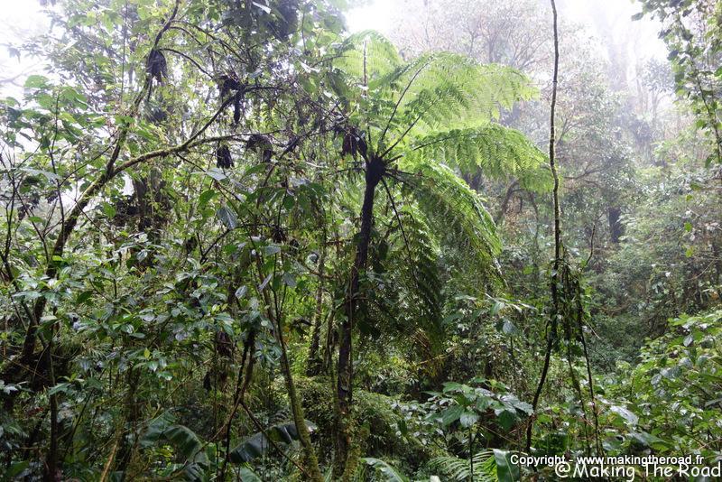 visiter reserva bosque nubuso santa elena costa rica