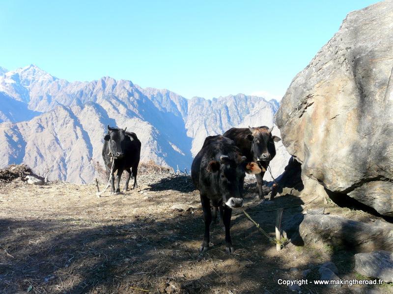 visiter inde du nord 2 semaines Uttarakhand joshimath