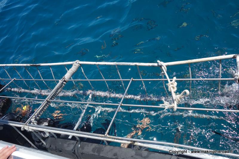 mossel bay requin afrique du sud prix