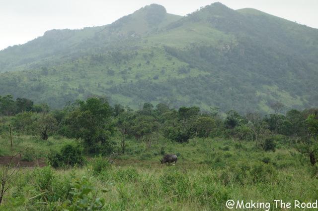 reserve afrique du sud Hluhluwe Umfolozi road trip