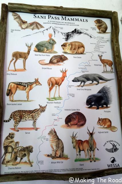 sani lodge backpackers sani pass randonnée afrique du sud hotel animaux