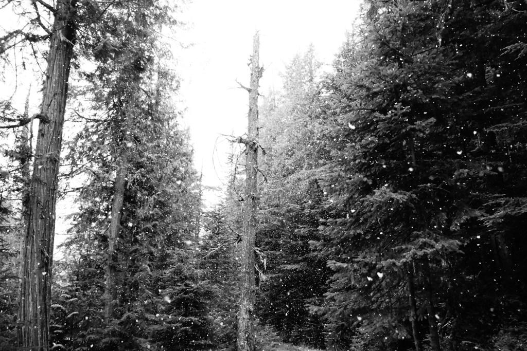 randonnee parc provincial mont robson