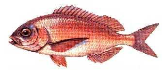 mercan Türkiye'deki balık çeşitleri nelerdir?