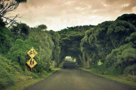 bir-bisiklet-yaya-yolu-manzarasi-avusturalya İlginç Fotoğraflar -1