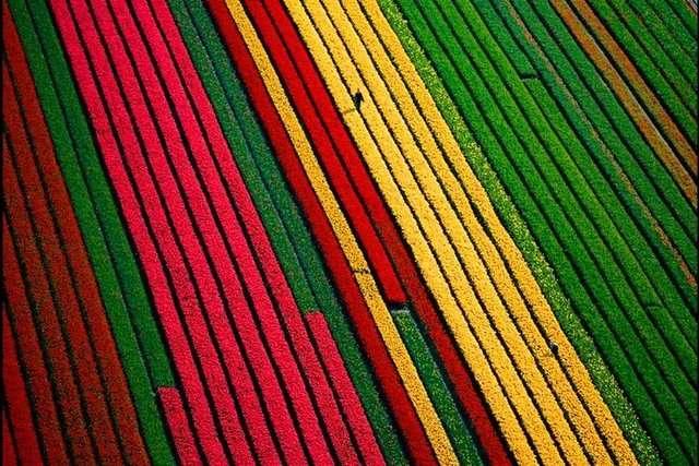 Hollanda-Lale-Nergis-Sumbul-Tarlalari-2 Renkli ve İnanılmaz Dünya Manzaraları