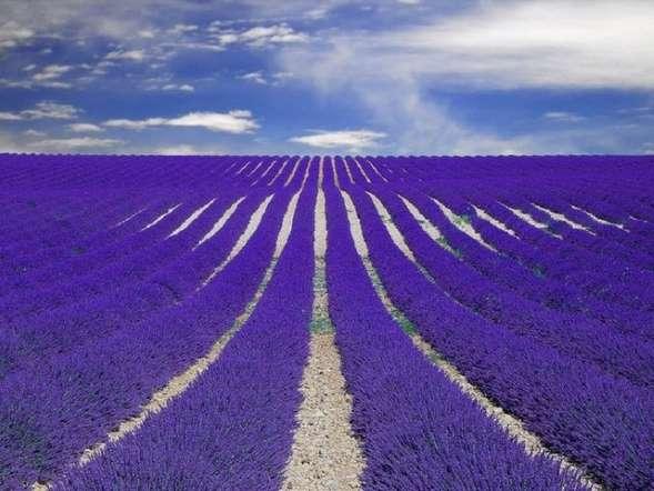 Provence-France-lavanta Renkli ve İnanılmaz Dünya Manzaraları