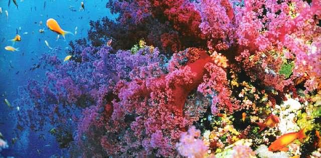 buyuk-merca-kayaliklari-avusturalya-1 Renkli ve İnanılmaz Dünya Manzaraları