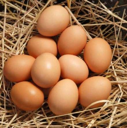 gobek-yaglarindan-kurtulmanin-yollari-yumurta Göbek yağlarından kurtulmak için bunları tüketin!