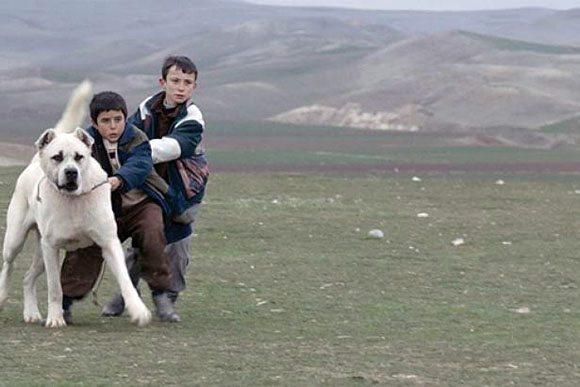 sivas-filmi-2015-oscar-aday-adayi Türkiye'nin,