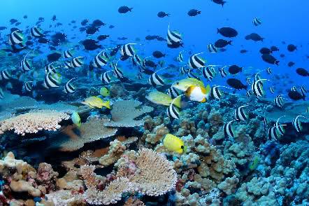 Clouds of reef fish and corals, French frigate shoals, NWHI Dünya Ve Uzay Hakkında İlginç Gerçekler