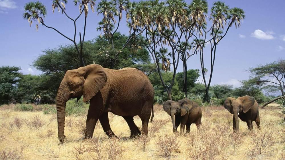 -fil- Yeryüzünde İnsan Ölümüne En Çok Sebep Olan Canlılar ( Sıralamaya Dikkat!! )