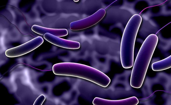 bagirsak-paraziti-kurdu-solucani-maksatbilgi Bağırsak Paraziti Tenya Nasıl Oluşur?Kurtulmanın Yolları