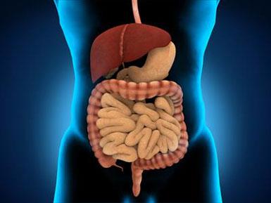 mide İnsan Vücudundaki Hadi Ya! Dedirtecek Mucizevi 20 Bilgi