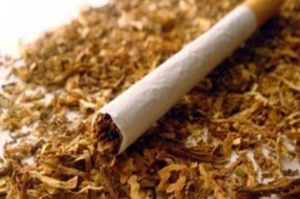 nikotin-sigara Nikotin Nedir ? , Vücudumuzdaki Nikotin Nasıl Temizlenir ?, Nikotini Temizleyen Besinler Nelerdir ?