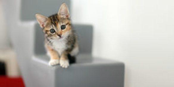 Kedi Sahiplenmeden Önce Bilinmesi Gerekenler