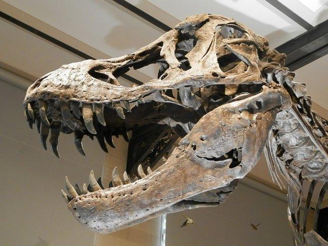 Japonya'da 81 Milyon Yıllık Dinozor Dişleri Bulundu