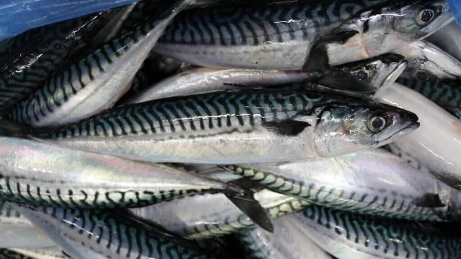 Kış Aylarında Hangi Balık Yenir?