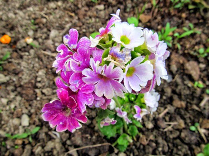 Evinizde Yetiştirebileceğiniz 11 Muhteşem Çiçek Türü