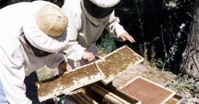apicultura, ayudas