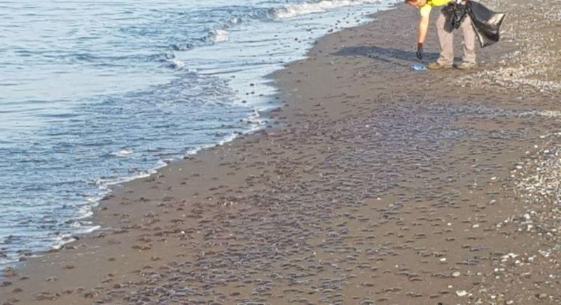 "La Mancomunidad Occidental encarga al Aula del Mar un estudio ""antimedusas"""