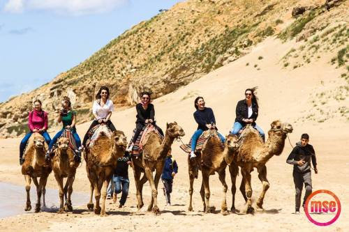 camel ride in Morocco - Malaga South Experiences
